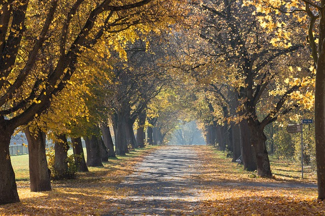 Woodheys-Park-