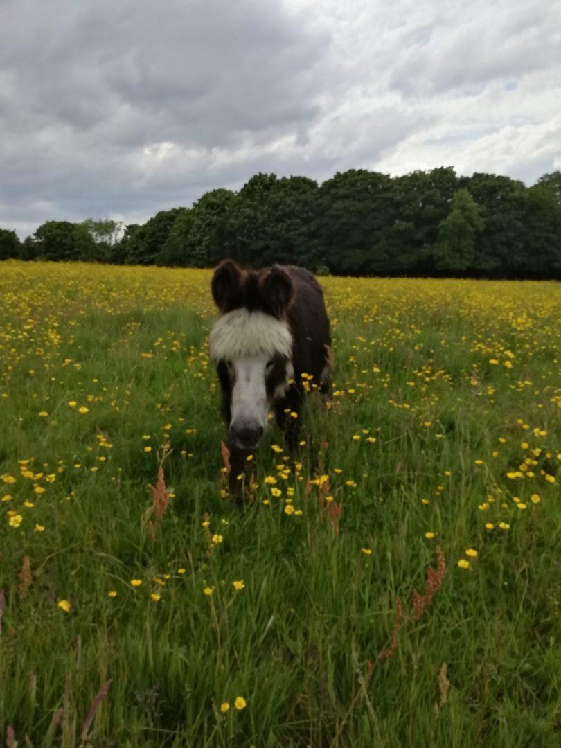 Durham Donkey Rescue