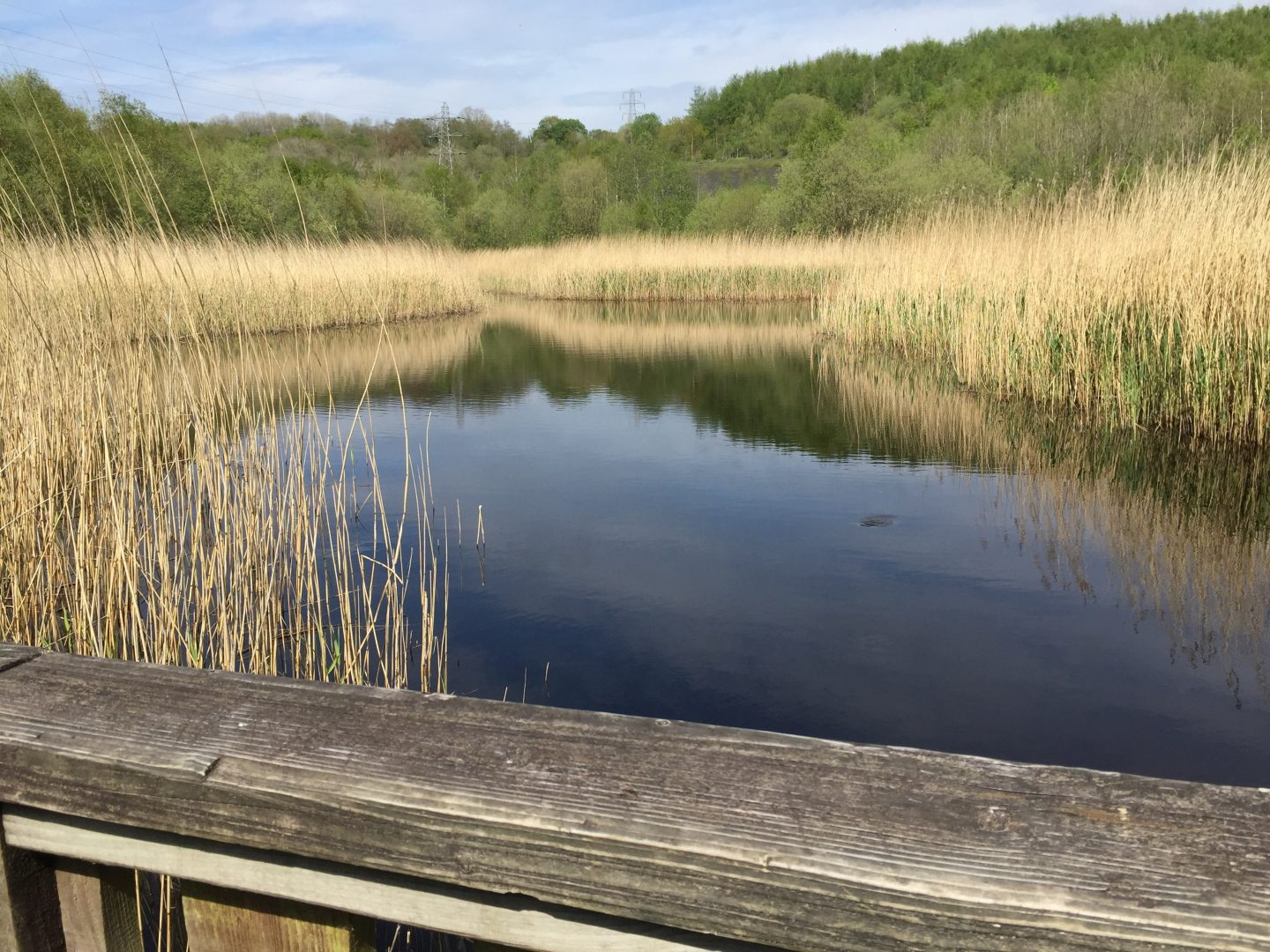 Low Barns Nature Reserve
