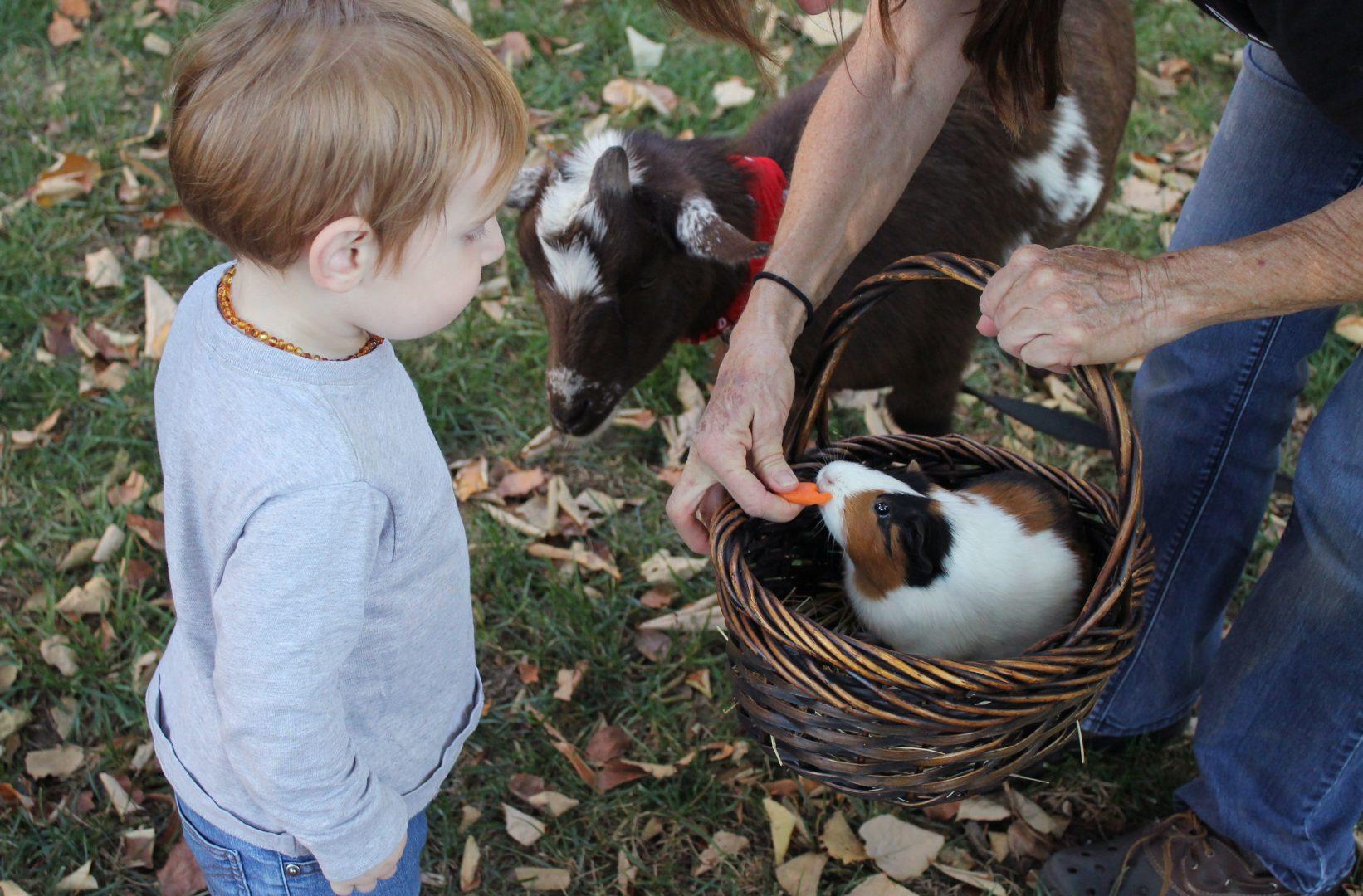 Hesketh Farm Park