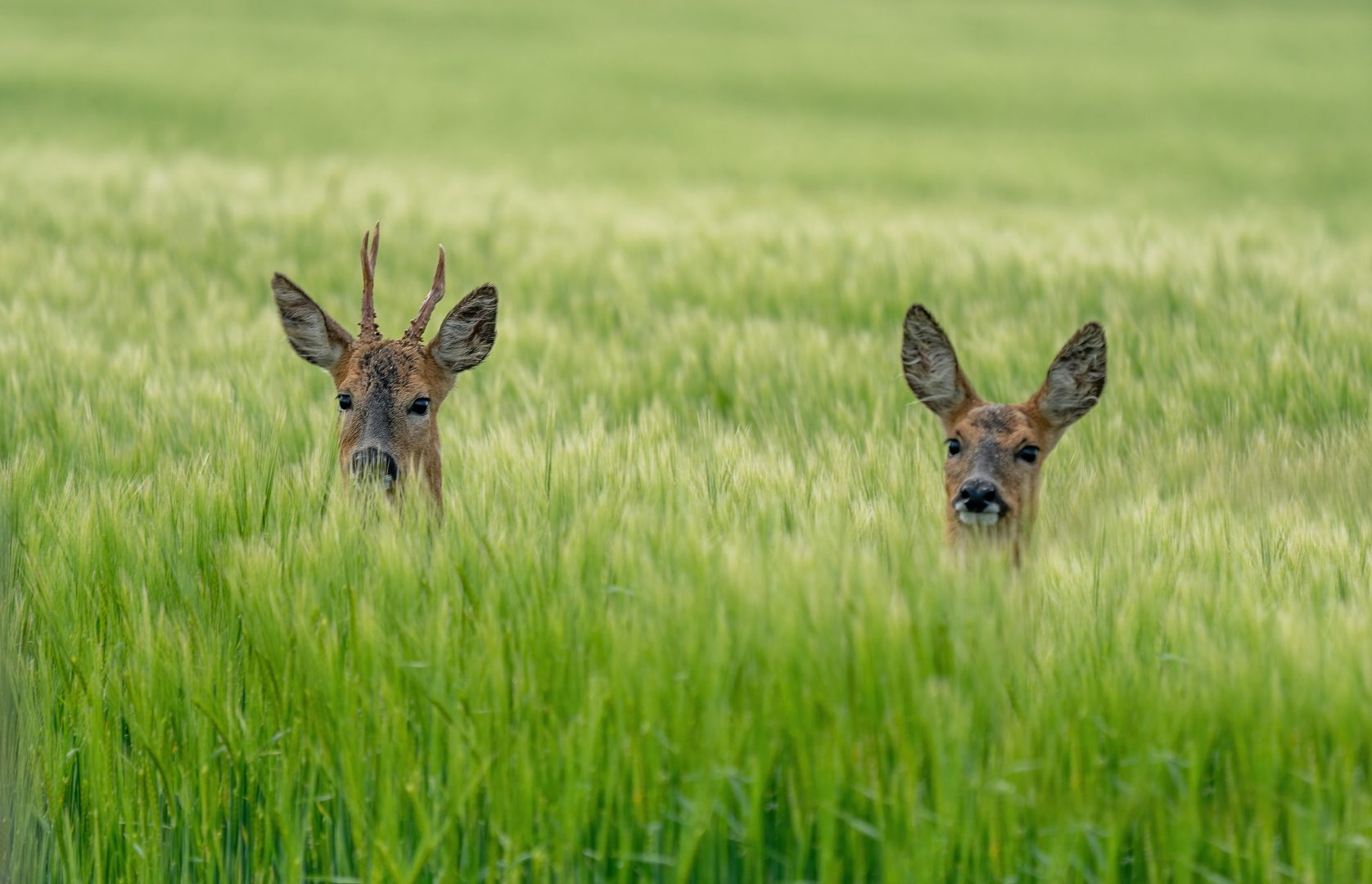 Rainton Meadows