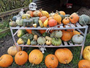 East-Grange-Farm-Pumpkin
