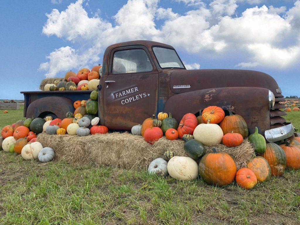 Farmer-Copleys-