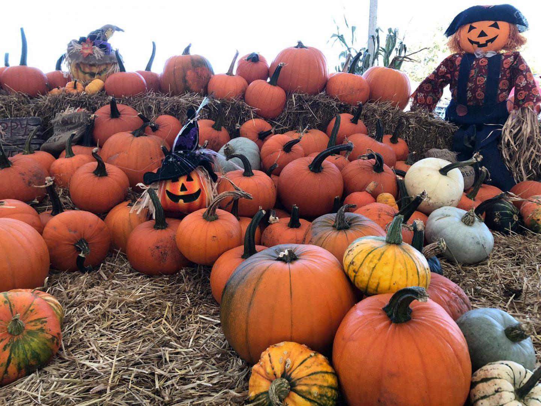 Farmer-Teds-Pumpkin