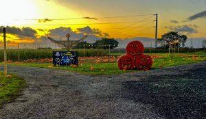 Farmer-Teds-