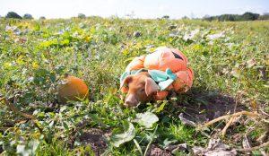 Piglets-Farm-