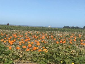 Pontac-Farm-Pumpkin-Patch