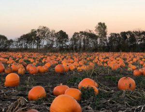 Pumpkin-Patch-High-Town-