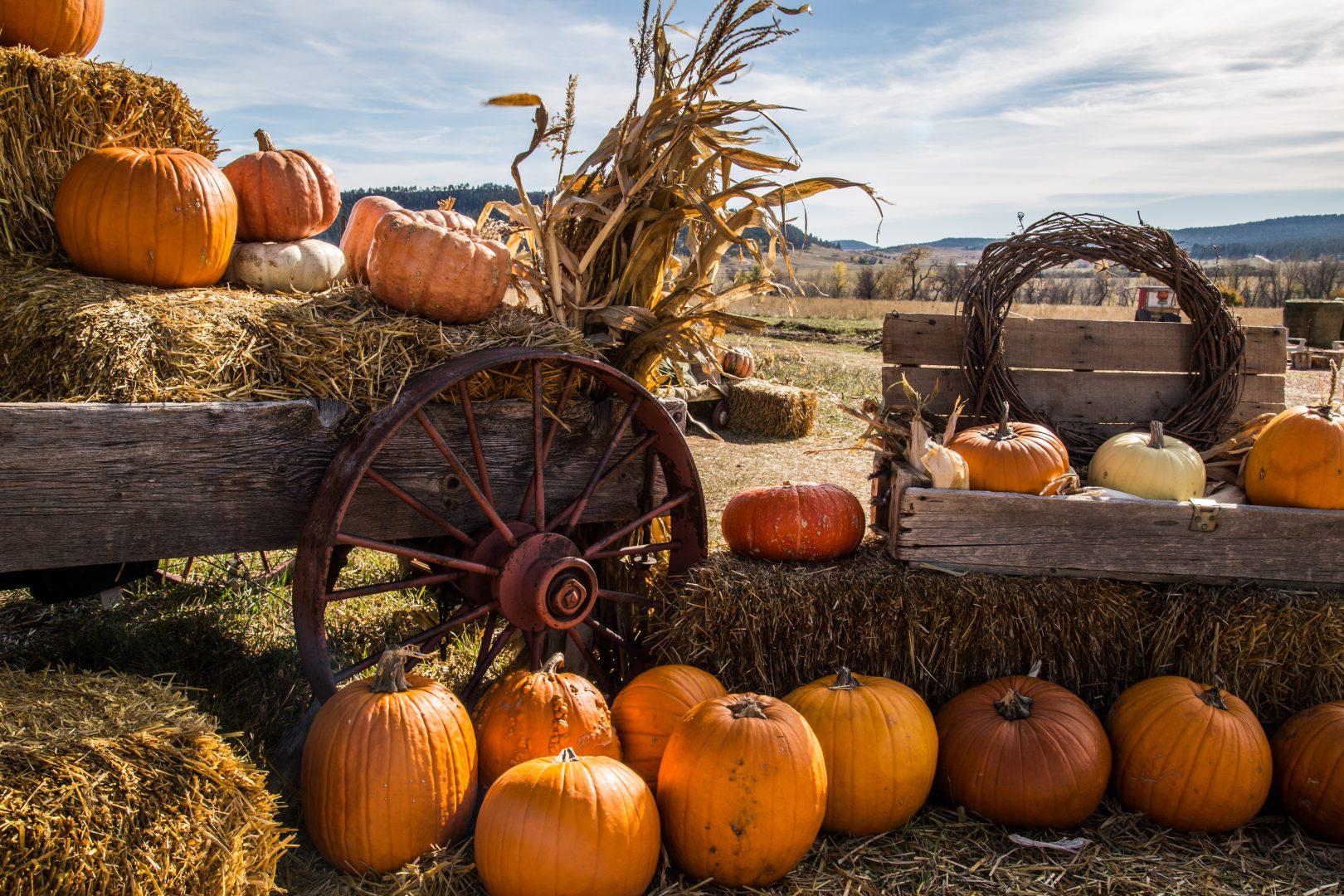 Pumpkin-banner-north